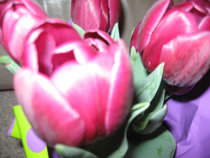 Tulips celebrate the new life in Spring.  These were a gift from Jeremy, my son Matthew's friend.